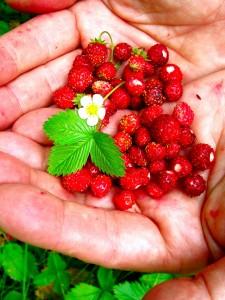 fructe de fragi